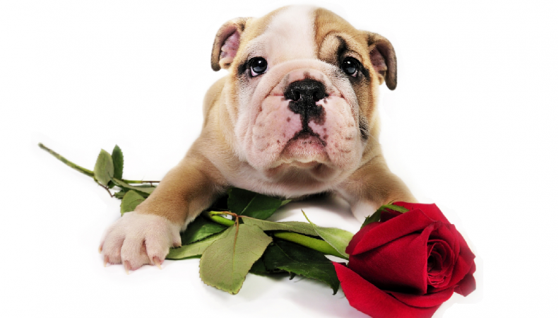 Puppies, Paris and Lingerie: A Very Social Valentine's